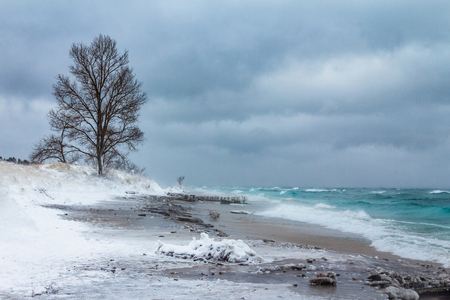 Lone tree braving the icy winter storm near point betsie light house, Benzie county Michigan. Stock Photo