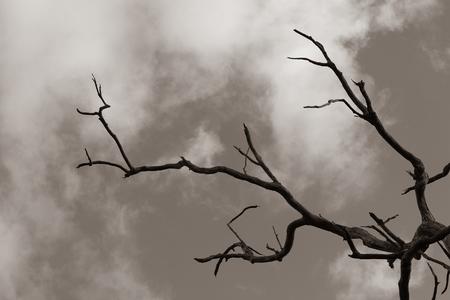 Árbol muerto seco estéril para el concepto de dolor y agonía sin esperanza. Destrucción y desesperación en un lugar caluroso y seco con sol ardiente. Árbol muerto envejecido. Foto de archivo