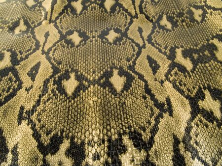 a close up on a snake skin texture Stock Photo