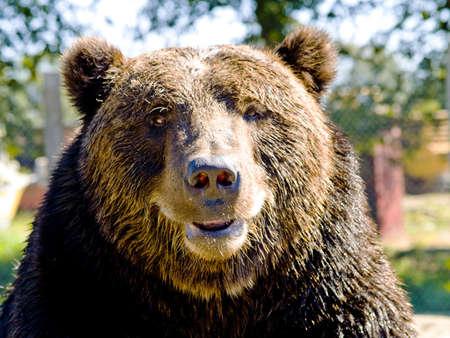A close up on a big bear.