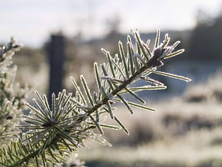 iciness: A close up on a frost covered branch on an early winter morning. Shallow depth of field. Stock Photo
