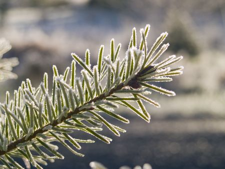 A close up on a frost covered branch on an early winter morning. Shallow depth of field. 免版税图像