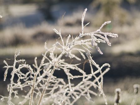 iciness: A close up on a frost covered plant on an early winter morning. Shallow depth of field. Stock Photo