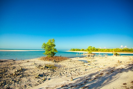 exotic view of the Gulf of Mexico on the island Holbox photo