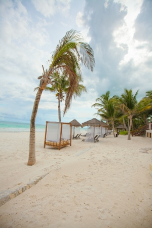 Beach beds near big palmtree at tropical exotic white beach photo