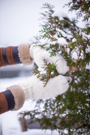 fir twig: Soft warm knitted mittens hold fir twig in winter