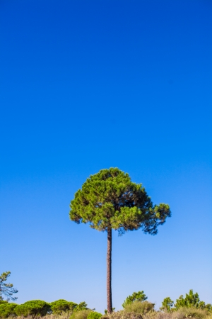 Tall tree on background blue sky photo
