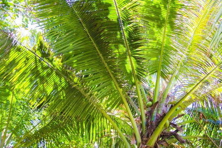 Large palm leaves on background blue sky photo