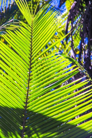 Large palm leaf on background blue sky photo
