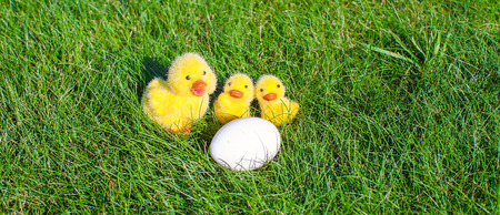 White chicken egg and yellow chickens in green grass photo