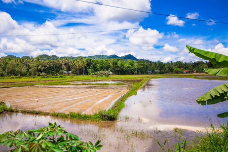 Green rice field in Philippine village on Bohol island photo