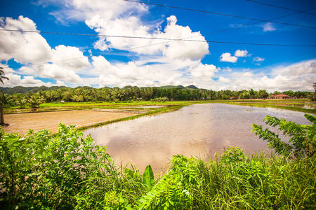 Green rice field in Philippine village on Bohol island photo