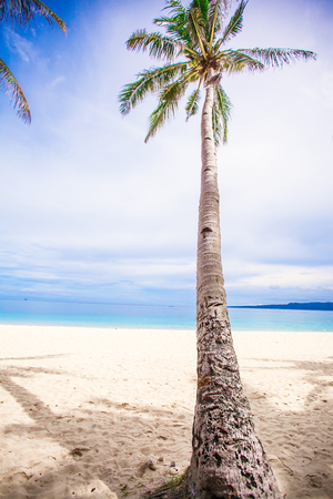 Coconut Palm tree on the sandy beach background blue sky and clean sea photo