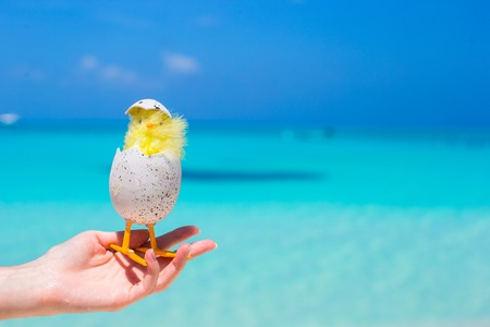 Small yellow easter chicken on the white beach photo