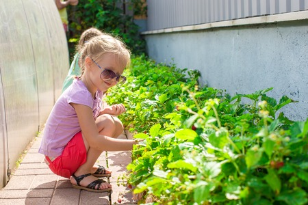 Little charming lovely girl in a greenhouse harvests, berries and strawberries photo