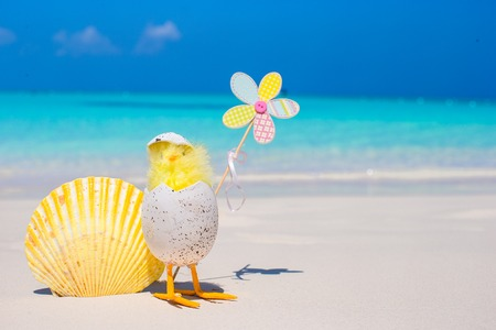 Small yellow chicken and shell on the white beach photo
