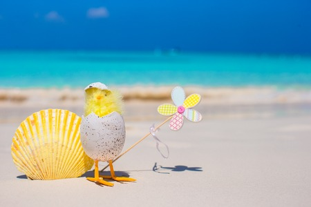 Small yellow chicken and shell on the white beach