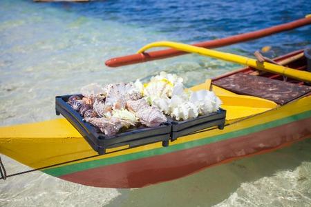 Beautiful colorful seashells in a basin on a tropical island photo