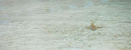 Baby shark in shallow water at Maldives photo