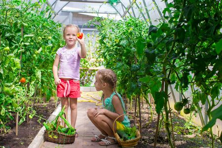 fresh girl: Little girls collecting crop cucumbers in the greenhouse