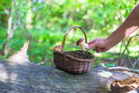 fungoid: Wicker basket full of mushrooms in a forest