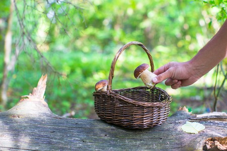 fungous: Wicker basket full of mushrooms in a forest