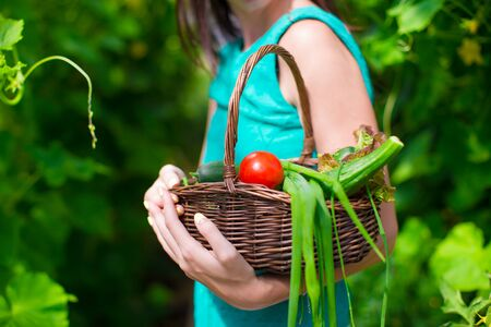 vegetable plants: Close-up basket of greens in womans hands