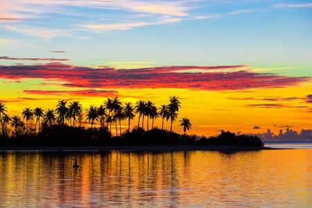palmier: Silhouettes sombres de palmiers et ciel nuageux incroyable au coucher du soleil