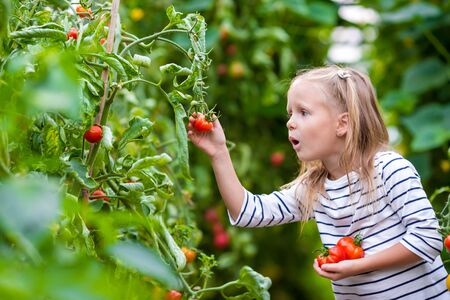 in the greenhouse: Cute little girl collects crop cucumbers and tomatos in  the greenhouse