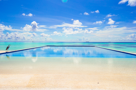 infinity pool: Luxury infinity swimming pool in the tropical hotel
