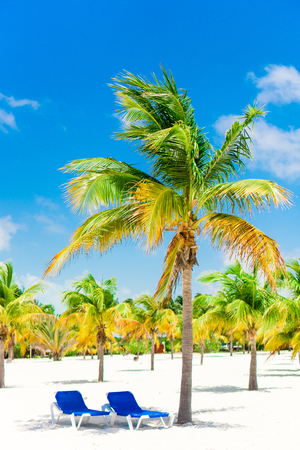 Palm trees on white sand beach with two loungers Stock Photo