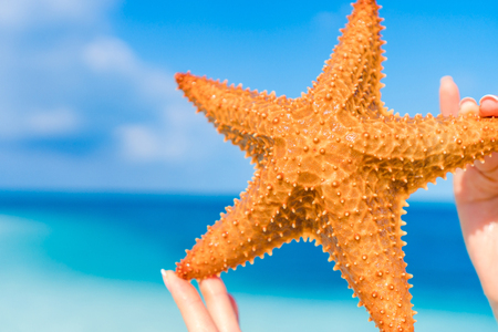 smooth: Tropical white sand with red starfish in hands background the sea