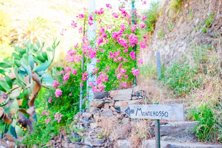 푸른 흔적은 모든 Cinque Terre에서 가장 간단하고 가장 유명하며 가장 많이 방문한 흔적입니다.