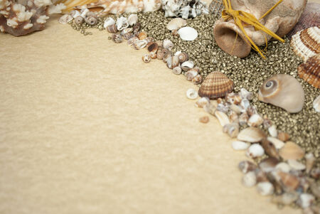 Sea shells with gravel  photo