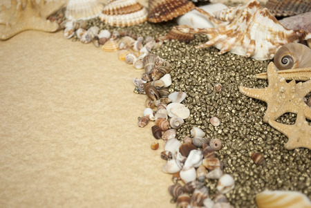 Sea shells with gravel as background photo