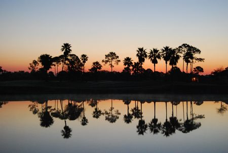 reflection of palm trees on water at golf course