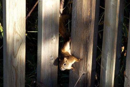 peekaboo squirrrel Zdjęcie Seryjne