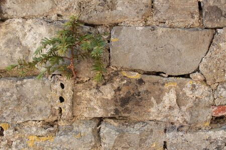 A stone wall with a small pine tree growing out of it