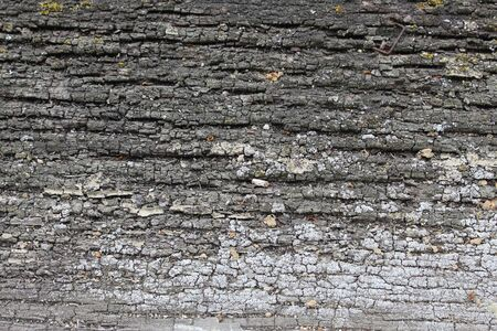 Close up of old wooden texture with rests of old paint and grey and white lichen