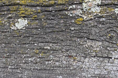 Weathered old wood texture with yellow and grey lichen Stok Fotoğraf