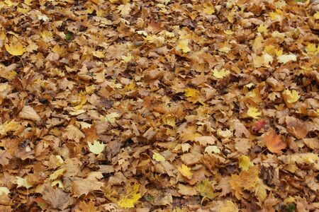 Autumn leaves textured background or wallpaper