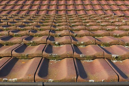 View from the bottom to roof tiles with moss and lichen with focus on foreground