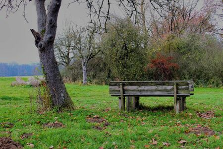 Old wooden bench standing next to a tree on a cloudy and foggy day, with bushes in the background