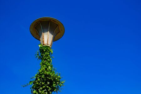 Old vintage street light with green ivy and blue sky