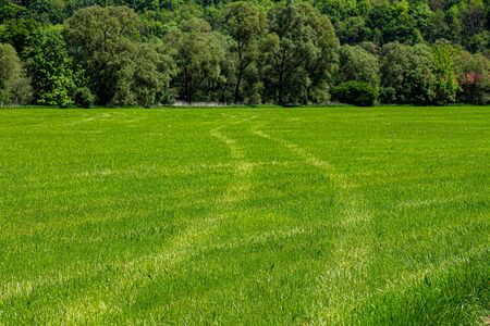 Tractor tracks in the grass with trees and bushes in the background 写真素材
