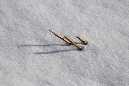 Grain stubble in a snow covered field in winter