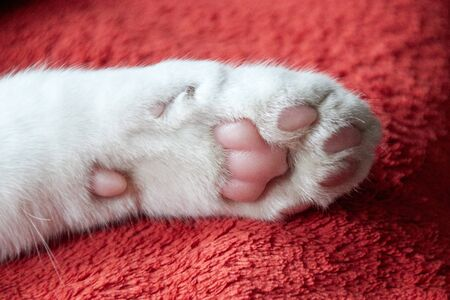 a white cats paw lies on a soft red blanket. You can clearly see the pink pads on the underside. It is a kitten.