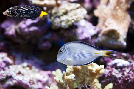 tropical animal in a salt water fish tank aquarium under water. Flash light can kill the animals so the photo was taken with available lights and reflectors Stock Photo - 4806131