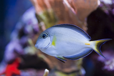 tropical animal in a salt water fish tank aquarium under water. Flash light can kill the animals so the photo was taken with available lights and reflectors Stock Photo - 4868109