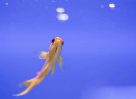 tropical animal in a salt water fish tank aquarium under water. Flash light can kill the animals so the photo was taken with available lights and reflectors  Stock Photo - 4966249